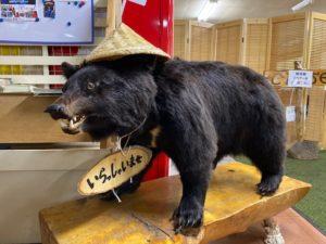 渋峠ホテル 熊お出迎え